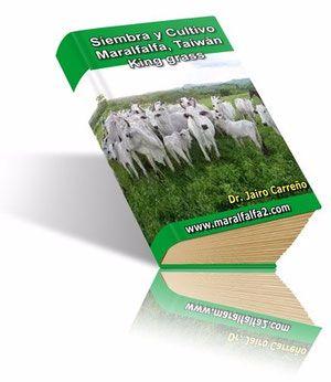 Manual De Siembra Y Cultivo Del Pasto Maralfalfa, Taiwan Y King Grass